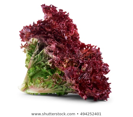 Lollo Rosso lettuce isolated on white background Stock photo © mcherevan