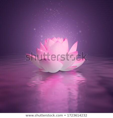 Lotus flower by sunset - 3D render Stock photo © Elenarts