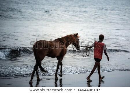 Horses near the sea Stock photo © joyr