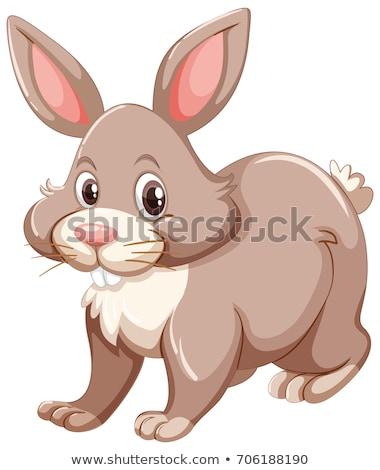 Grau glückliches Gesicht Illustration glücklich Natur Kaninchen Stock foto © bluering
