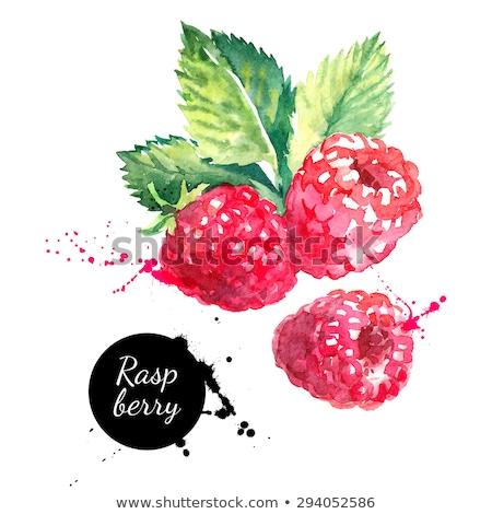 Watercolor illustration of raspberry Stock photo © Sonya_illustrations