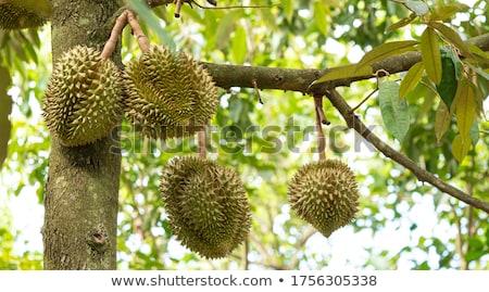 果樹 タイ 食品 フルーツ 庭園 背景 ストックフォト © smuay
