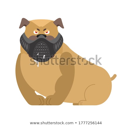 Angry dog in muzzle. Evil Bulldog wearing mask. Home pet aggress Stock photo © popaukropa