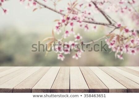 tulip flower on blur background stock photo © bluering
