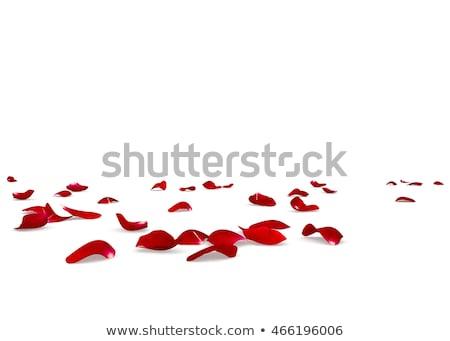 Kırmızı gül kırmızı sağlık taş Stok fotoğraf © yo-yo-