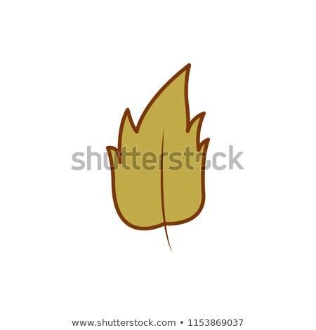 Kuru yeşil yaprak sonbahar karikatür örnek dizayn Stok fotoğraf © svvell
