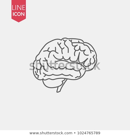Human brain icon, symbol of intellect, study, learning and education. Stock photo © MarySan