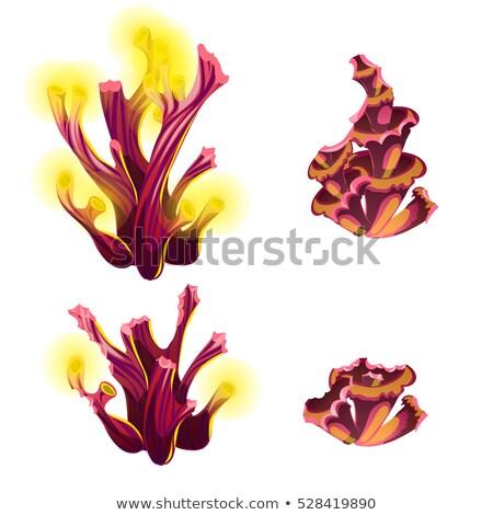 Coloré marines cartoon partiellement corail Photo stock © Lady-Luck