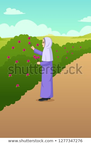 Muslim Woman Picking Out Flowers in the Garden Illustration Stock photo © artisticco