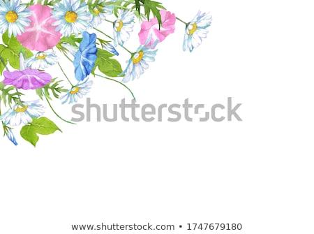 желтый утра слава цветок белый иллюстрация Сток-фото © colematt