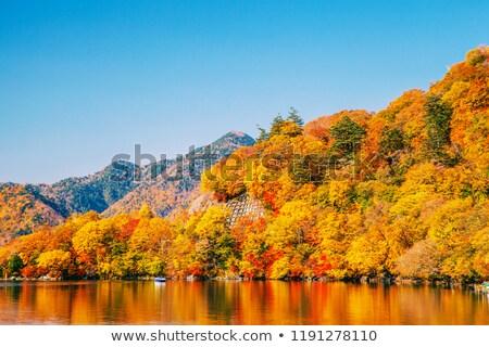 Lac Japon paysage parc arbre forêt Photo stock © daboost