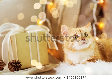 red tabby cat on sofa with christmas gift at home Stock photo © dolgachov