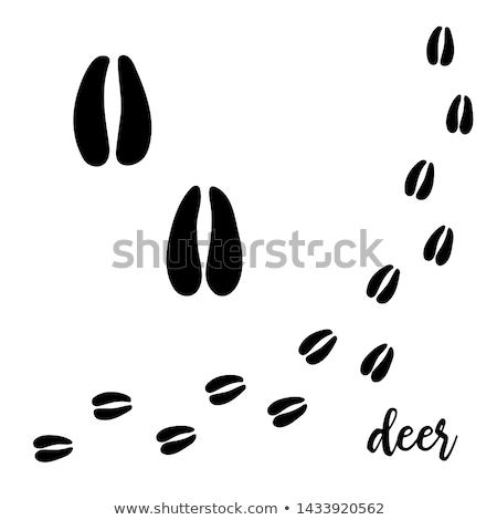 Black footprints of deer Stock photo © ratkom