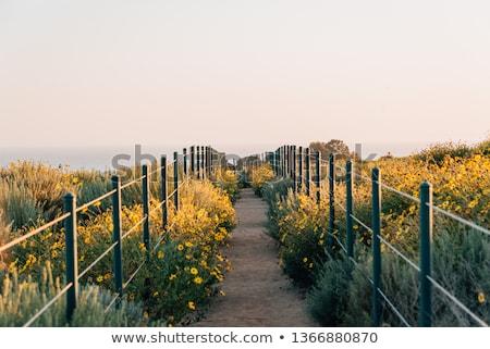 Idyllisch kust landschap Californië planten Stockfoto © prill