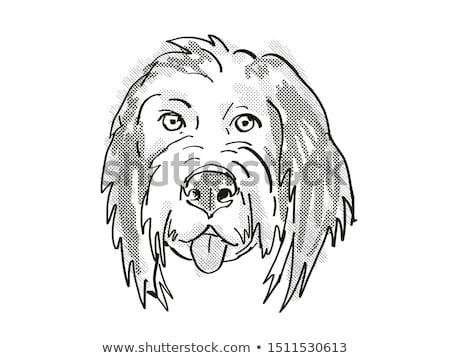 Bernedoodle or Bernese Mountain Poo Dog Breed Cartoon Retro Drawing Stock photo © patrimonio