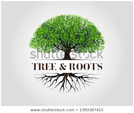 Mangrove tree roots Stock photo © boggy