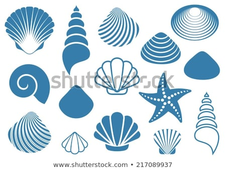 Сток-фото: Set Of Background Of Various Sea Shells