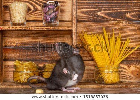 Fat rat with cheese Stock photo © nomadsoul1
