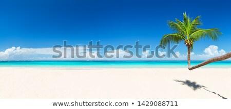 美しい 海浜砂 ココナッツ ツリー 空 エキゾチック ストックフォト © AndreyPopov