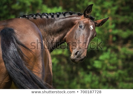 Horse or Stallion, Domestic Animal Stand on Meadow Stock photo © robuart