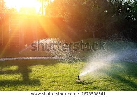 sprinkler watering the green grass stock photo © deyangeorgiev
