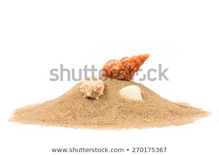 多くの シェル 砂 自然 壊れた シーフード ストックフォト © Gertje