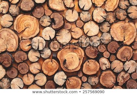 ストックフォト: 木材 · カバー · 雪 · 木 · 産業