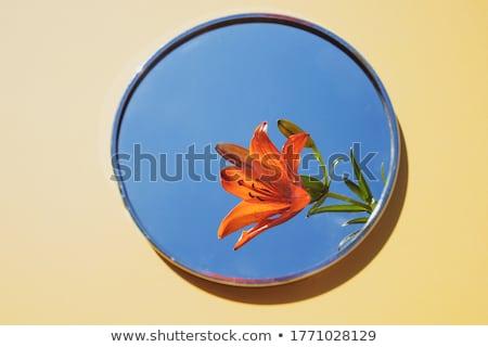 laranja · tigre · lírio · blue · sky - foto stock © peterveiler