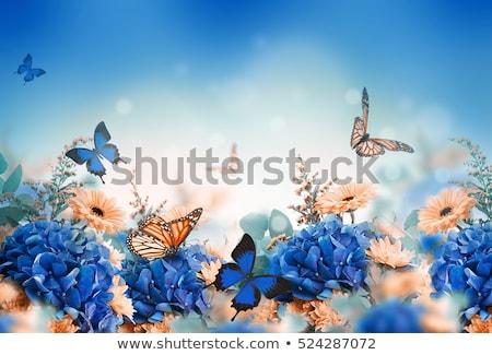 Floral Valentine background with butterflies Stock photo © Elmiko