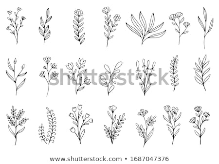 Hand Drawn floral background stock photo © Elmiko