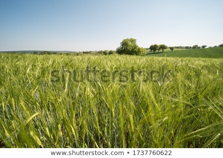 landscape with field and sky Stock photo © courtyardpix