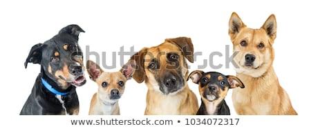 head of mixed breed dog stock photo © eriklam