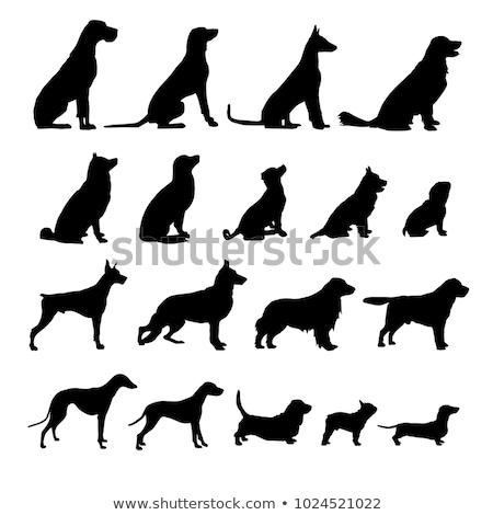 Chiens ombre illustration chien Épouvantable lumière Photo stock © nik187