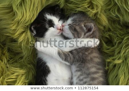 Weinig kittens buitenshuis natuurlijk licht cute Stockfoto © tobkatrina