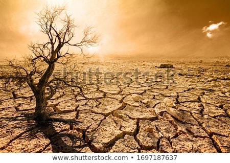 Paisagem secar árvore húngaro casas natureza Foto stock © samsem