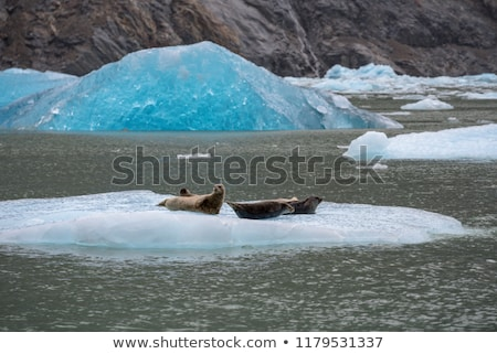Porto selar icebergue Alasca oceano Foto stock © jaymudaliar