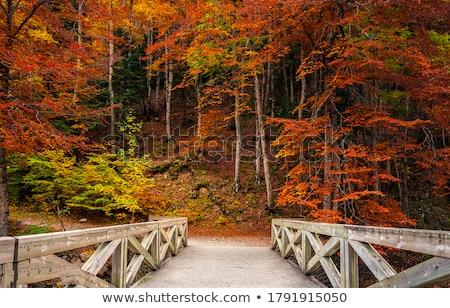 houten · brug · najaar · mistig · dag - stockfoto © HectorSnchz