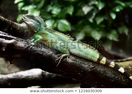 Stock photo: Iguana in a tree at a zoo in Vietnam