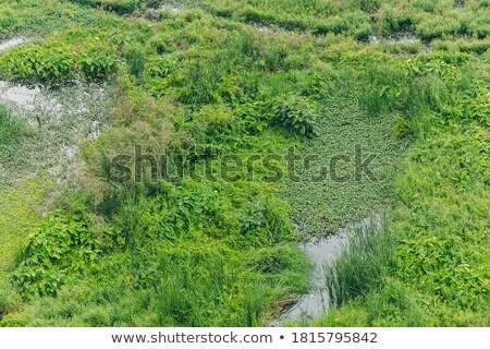 Flooded Cypress Leaf Stock photo © eldadcarin