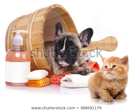 kat · bad · huisdier · haren · Blauw · grappig - stockfoto © cteconsulting