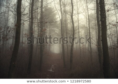 rio · profundo · montanha · floresta · parque · Romênia - foto stock © ondrej83