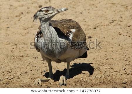 Vad szabad madarak Afrika egyedi színek Stock fotó © Livingwild