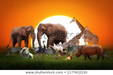 zsiráf · feketefehér · kreatív · fekete · kép · természet - stock fotó © livingwild