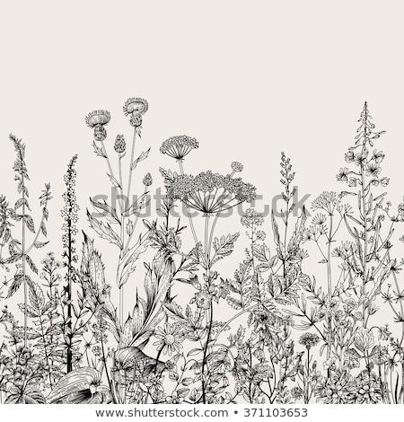 Wild vegetatie foto reis bloem Stockfoto © iko