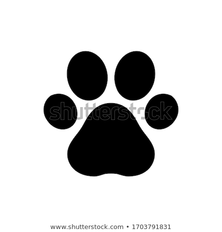 Animal cat paw track feet print icons with shadow. Stock photo © Hermione