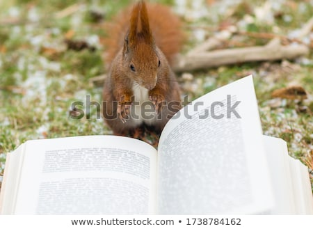 judicieux · rat · de · bibliothèque · livres - photo stock © jorgenmac