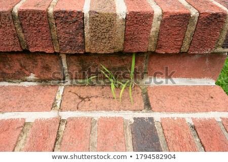 Kolorowy cegieł bruk puszka używany Zdjęcia stock © alekleks
