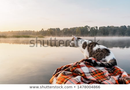 Chat regarder poissons bol note vivant Photo stock © c-foto
