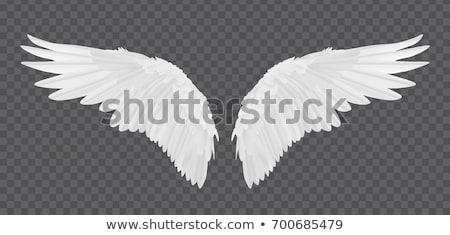 angyal · szárnyak · fehér · háttér · toll · fekete - stock fotó © kimmit
