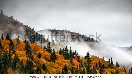 Ağaçlar orman Quebec Kanada doğa manzara Stok fotoğraf © bmonteny
